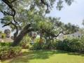 315-S-Edison-Hyde-Park-Cristan-Fadal-Garden